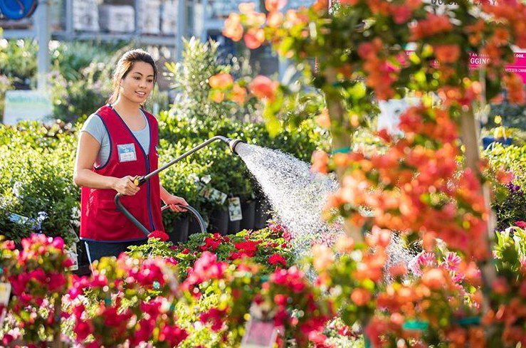 A Lowes Employee Watering The Plants They Sell